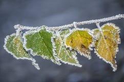 au-dessus de l'hiver de prises Images stock