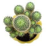 au-dessus de la vue de vert de cactus Photographie stock libre de droits