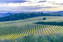 Au-dessus des champs dans Montepulciano un matin à l'aube Images stock