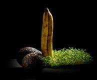 Au-dessus des fruits, de la banane, de l'avocat et du maracuja mûrs Image libre de droits