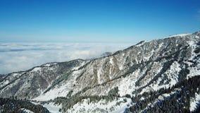 Au-dessus des nuages dans les montagnes neigeuses Sapin vert croissant Ate a couvert de neige images libres de droits