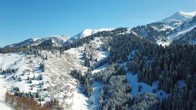 Au-dessus des nuages dans les montagnes neigeuses Sapin vert croissant Ate a couvert de neige image libre de droits