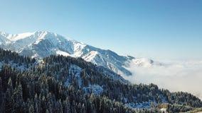 Au-dessus des nuages dans les montagnes neigeuses Sapin vert croissant Ate a couvert de neige photo stock