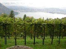 Au-dessus des vignes de Lugano Images libres de droits