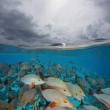 Au-dessus du banc de dessous de mer de la fente de poissons et de ciel nuageux photos stock
