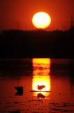 au-dessus du coucher du soleil de fleuve Images libres de droits
