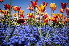 Au milieu d'un champ coloré photographie stock