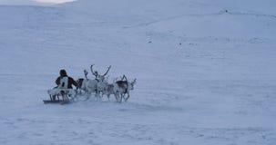 Au milieu de l'homme arctique de neige portant une fourrure et avoir un tour avec des rennes sur un traîneau Mouvements lents banque de vidéos