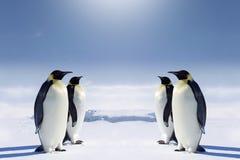 Au pôle du sud Image libre de droits