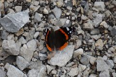 Au printemps, le papillon se dore au soleil se reposant sur une pierre photos stock