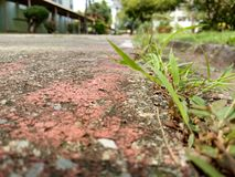 Au sol photo libre de droits