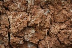 Au sol criqu? de sol Texture ou fond criqu?e de sol Abstraction normale Fond au sol Fissures au sol photos libres de droits