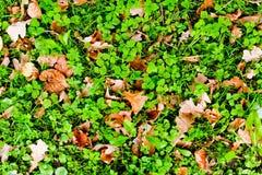 Au sol d'automne Photos libres de droits
