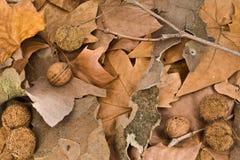 Au sol d'automne Images libres de droits