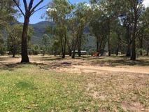 Au sol de camping Photographie stock libre de droits