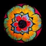 Au sol de dos de noir d'impression florale Images libres de droits