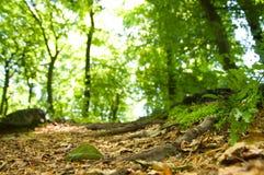 Au sol de forêt images libres de droits