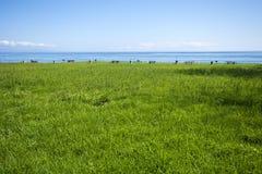 Au sol de pique-nique dans le domaine herbeux à l'océan images libres de droits