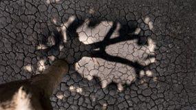 Au sol séchez Photographie stock libre de droits