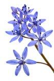 Au sujet de la première fleur de source Photo libre de droits