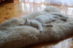 Au sujet de tout le chat préféré Photos stock