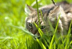 Au sujet des animaux familiers et du manque de vitamines photo stock