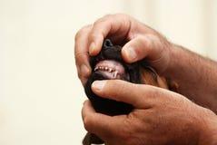 Au vétérinaire photo libre de droits