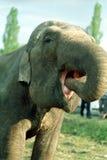 Au zoo images stock