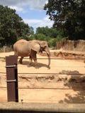 Au zoo Image libre de droits