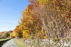 绕乡下公路在有五颜六色的auatumn foli的克勒兹省法国 免版税库存图片