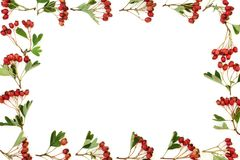 Aubépine Berry Background Border photographie stock libre de droits
