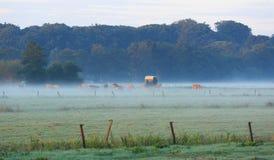 Aube brumeuse Photo stock