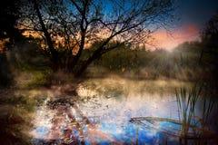 Aube brumeuse au-dessus de forêt de lac Images stock
