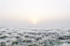 Aube brumeuse dans le marais photos stock