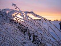 Aube de l'hiver Photographie stock