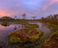 Aube de marais Région de Léningrad Russie Image stock