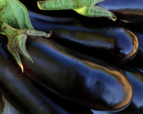 Aubergine Royalty Free Stock Images