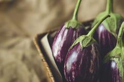 aubergine Lizenzfreie Stockbilder