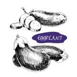 aubergine vektor illustrationer