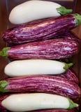 aubergine barwi gwo Zdjęcie Royalty Free
