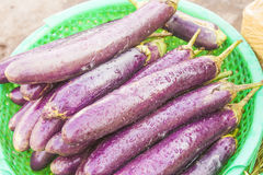 Aubergine Royalty Free Stock Photos
