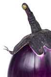 Aubergine crue Photos libres de droits