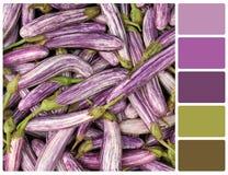 Aubergine de légume frais avec des échantillons de couleur de palette Photo libre de droits