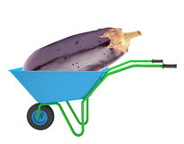 Aubergine in hand-barrow Royalty Free Stock Images