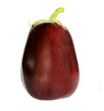 Aubergine. Isolated with white background Stock Images