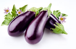 Aubergine with leaves and flowers isolated on white Stock Photography