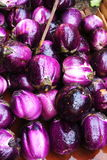 Aubergine at market Stock Photography