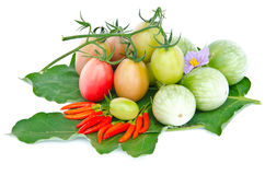 Aubergine, piments et tomates. Images libres de droits