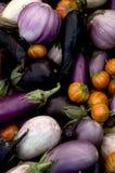 Aubergine-Vielzahl Lizenzfreies Stockbild