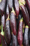 Aubergine with waterdrops Royalty Free Stock Images